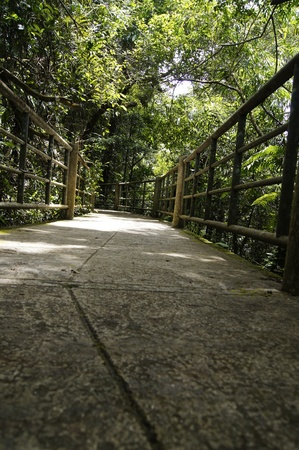 Walkway to forest photo