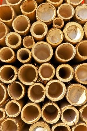 bamboo tree: Bamboo pipes. Stock Photo
