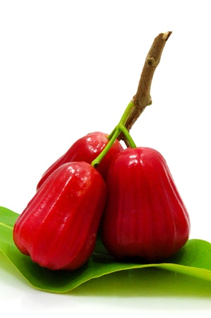 Thai fruit Rose apple isolated in white background Stock Photo