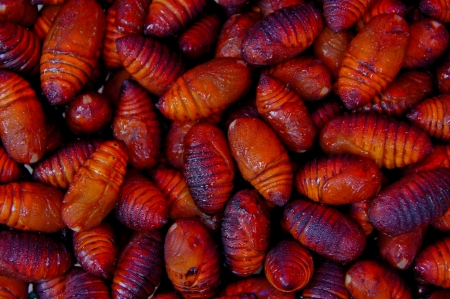 wigglers: Caterpillar for grub