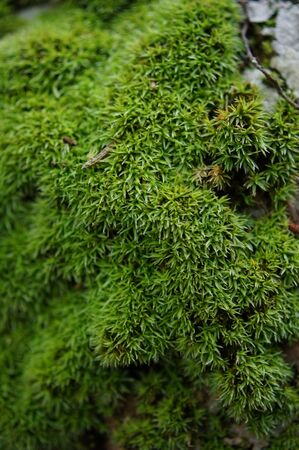 Moss in the rain forest in botanical garden, Southern Thailand. photo