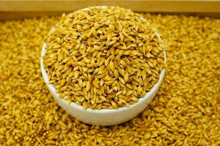 Rice Seed Stock Photo