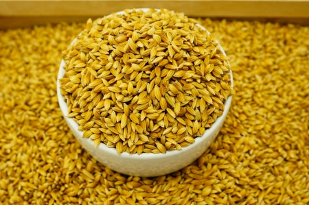 Rice Seed Stock Photo