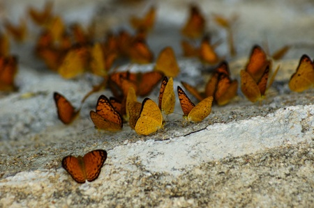 Butterfly Group on stone