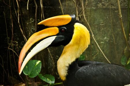 strikingly: Hornbill Stock Photo