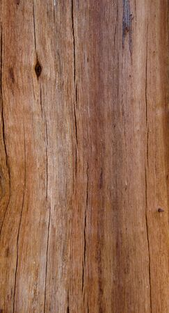 wood texture of pine  photo