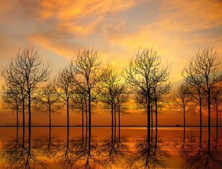 Dead tree silhouettes at sunset  photo