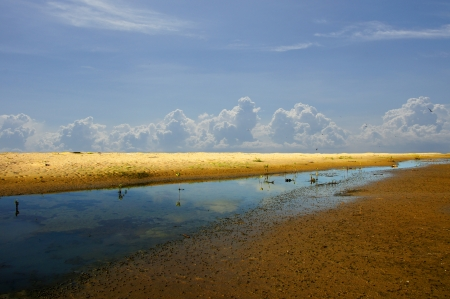 Mangrove forest topical rainforest for background, Ta lum pook promontory of Thailand Stock Photo - 15857500