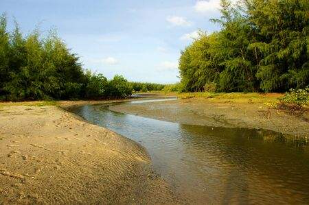 salt marsh: Mangrove forest topical rainforest for background, Ta lum pook promontory of Thailand.