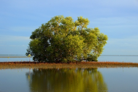 Mangrove forest topical rainforest for background, Ta lum pook promontory of Thailand. Stock Photo - 15857493