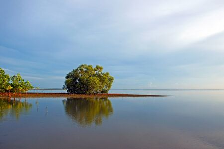 Mangrove forest topical rainforest for background, Ta lum pook promontory of Thailand. Stock Photo - 15857475