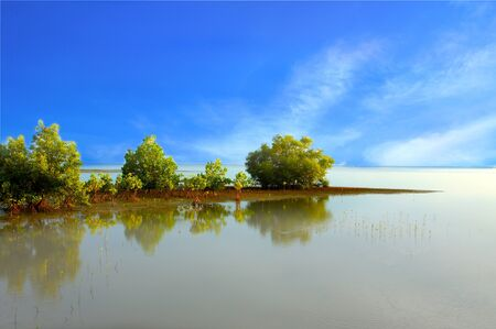 Mangrove forest topical rainforest for background, Ta lum pook promontory of Thailand. Stock Photo - 15857491