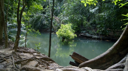 green water in forest Stock Photo - 16152924