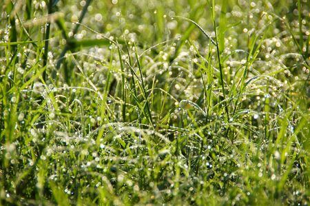 grass and dew impact sunlight in the morning  Stock Photo - 16152980