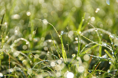 grass and dew impact sunlight in the morning