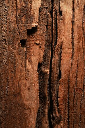 Description For over 100 years old wooden surface  photo
