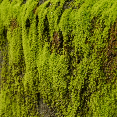 closeup old street Overgrown with Green Moss in forest photo