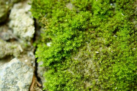 closeup old Stone with Green Moss in forest photo