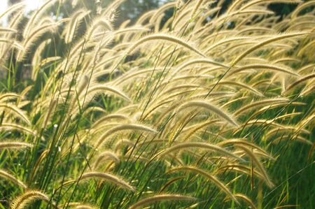Flower grass impact sunlight. Stock Photo - 16580060