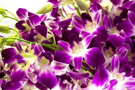 Purple orchids bouquet on white background. photo