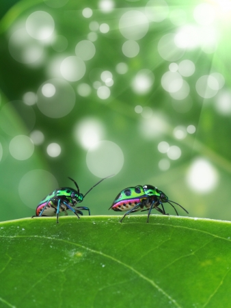 Green ladybug on leaf  photo