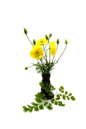 funeral background: cosmos flower arrangement. Stock Photo
