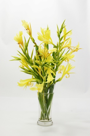 Indian shot flower arrangement. Stock Photo - 16942151