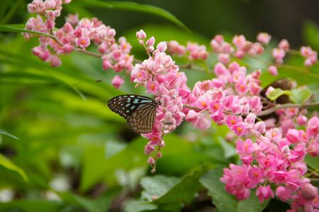 Butterfly on pink flower Stock Photo - 17655404