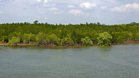 actueel: Mangrove forest topical rainforest Thailand