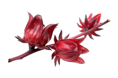 sorrel: Hibiscus sabdariffa or roselle fruits