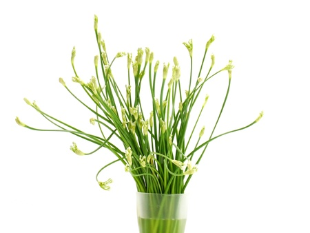 Garlic chives flower in the white background..