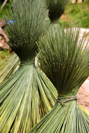 Papyrus for basketry. photo