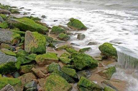 algas verdes: Las algas verdes en las rocas junto al mar