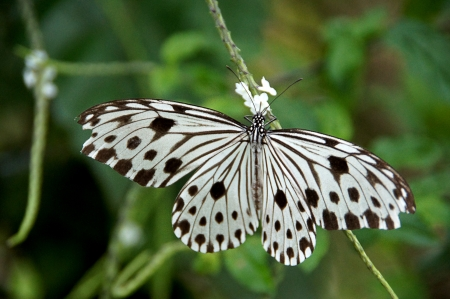 Black white butterflies in the wild. photo