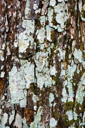 Background texture with yellow and grey lichen. photo
