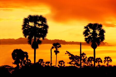 Palm silhouettes after sunset. photo