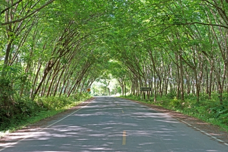 tunnel of green trees photo