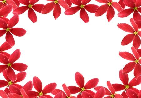 Red flower of rangoon creeper on white background stock photo red flower of rangoon creeper on white background stock photo 19594404 mightylinksfo