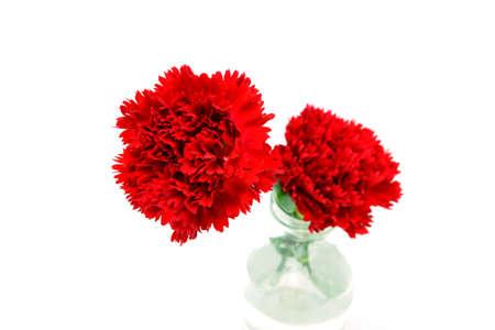 elegant carnation for mothers day image photo
