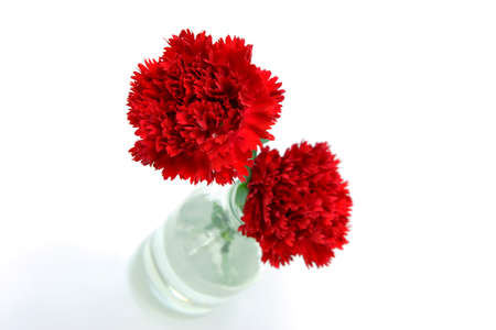 elegant carnation for mother's day image photo