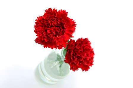 elegant carnation for mother's day image Stock Photo - 19835402