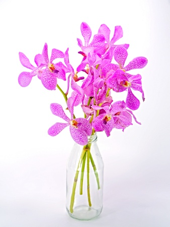 Pink mokara orchids isolated on white background. photo