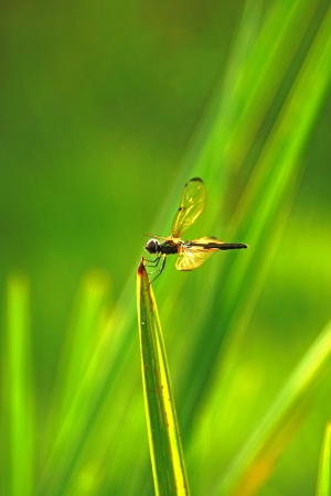 dragonfly in the garden. photo
