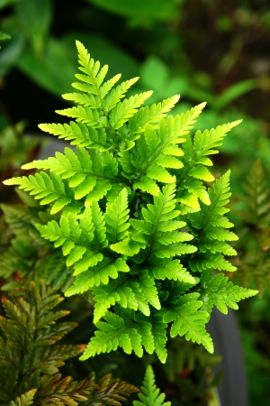 fern leaves Stock Photo - 20023162