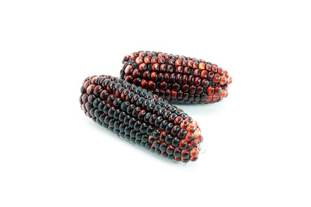 waxy: Waxy Corn on a white background