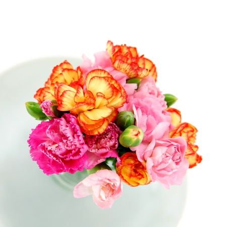 Smaller carnations on a white background  for mothers day. photo