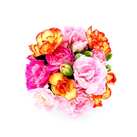 smaller: Smaller carnations on a white background  for mothers day.
