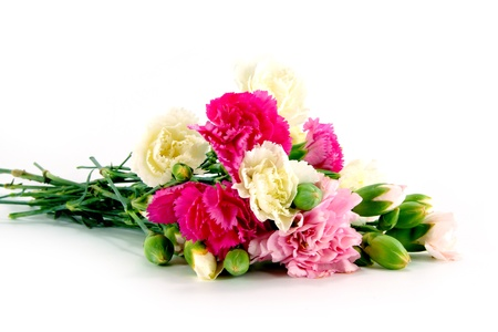Smaller carnations on a white background  for mother's day. photo