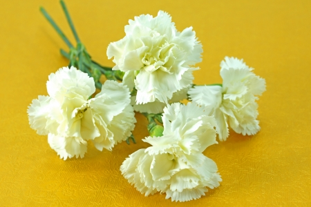 White carnation on paper. photo