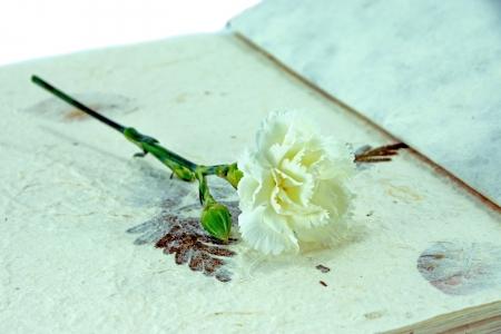 White carnation on paper. photo